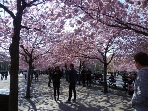 Park ve Stockholmu